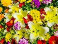 żółte i różowe kwiaty z zielonymi liśćmi