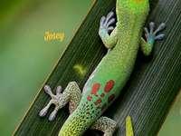 Kleurrijk reptiel