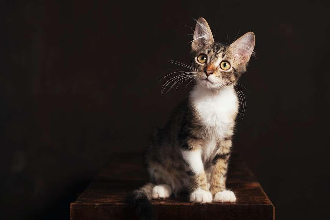 pisică tabby maro și albă pe masă de lemn maro puzzle