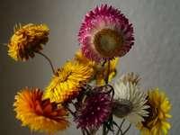 gelbe und rosa Blume in der Nahaufnahmefotografie