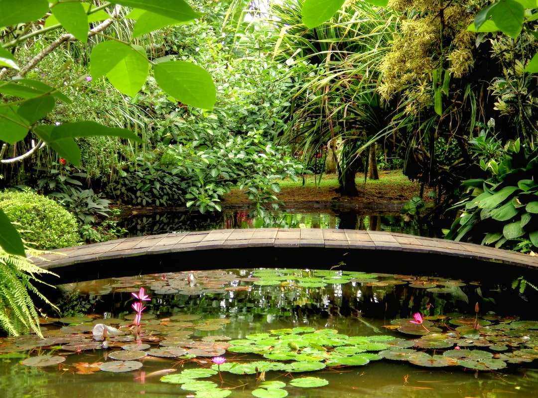 nenúfares verdes na água - Taman Bunga Nusantara em Cipanas, West Java, Indonésia. Cipanas, Cianjur Regency, West Java, Indonésia (18×14)