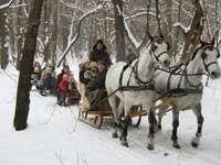 Por la nieve con el trineo