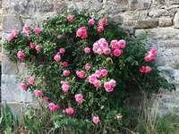 flores rosadas al lado de la pared de hormigón gris