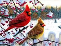 winter vogels