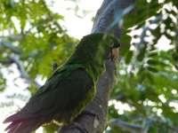 Perroquet vert sur une branche d'arbre brune pendant la journée
