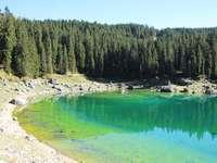 lago verde cercado por árvores verdes durante o dia