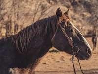 hnědý kůň stojící na hnědém poli během dne