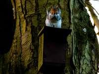 gato marrom e branco em caixa de madeira marrom