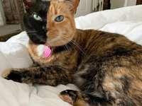 Venus de kat met 2 gezichten.