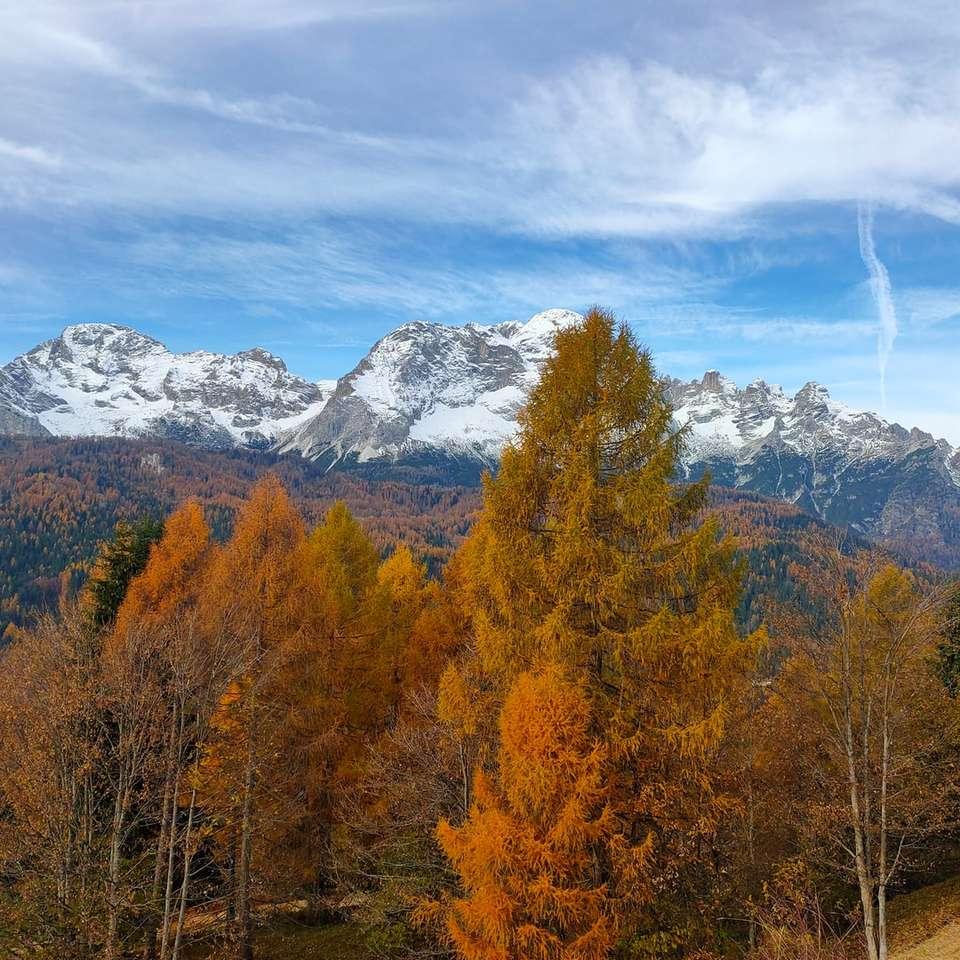 árboles marrones y verdes cerca de la montaña cubierta de nieve - árboles marrones y verdes cerca de la montaña cubierta de nieve durante el día. . Val di Zoldo, Longarone, BL, Italia (16×16)