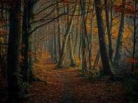 hnědé stromy na hnědé půdě