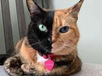 Venus de kat.