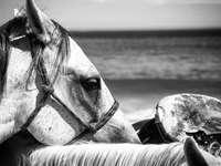 Graustufenfoto des Pferdes, das am Strand isst