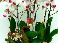 Zusammensetzung der künstlichen Orchideen