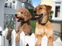 wachtende honden