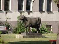Le monument de la vache à Stary Pole