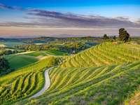 Viticulture de Medimurje en Croatie