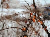 barna fa ága a hó