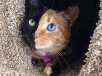Venus el gato.