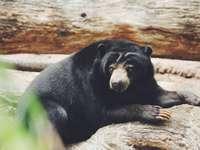 urs negru pe ramura de copac maro în timpul zilei