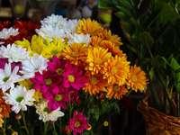 weiße gelbe und rote Blüten