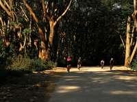 lidí, kteří jdou po šedé betonové silnici obklopené stromy