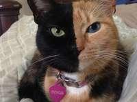 Vénusz a macska.