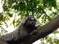 Mono marrón en la rama de un árbol durante el día