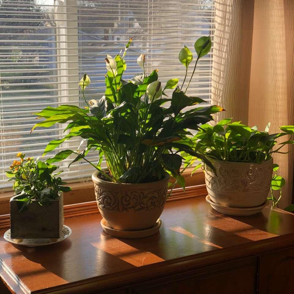 πράσινο φυτό σε καφέ πήλινο δοχείο - 202 Sixth Street Cir SE, Νέα Πράγα, Ηνωμένες Πολιτείες (6×6)