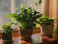 plante verte sur pot en argile brune