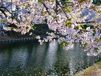 białe i fioletowe kwiaty na zbiorniku wodnym