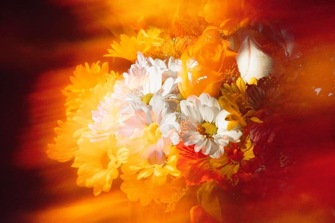 białe i żółte kwiaty na brązowym drewnianym stole - Podwójna ekspozycja bukietu kwiatów przy użyciu filtrów analogowych z efektami specjalnymi. Uniontown, Uniontown, Stany Zjednoczone (7×5)