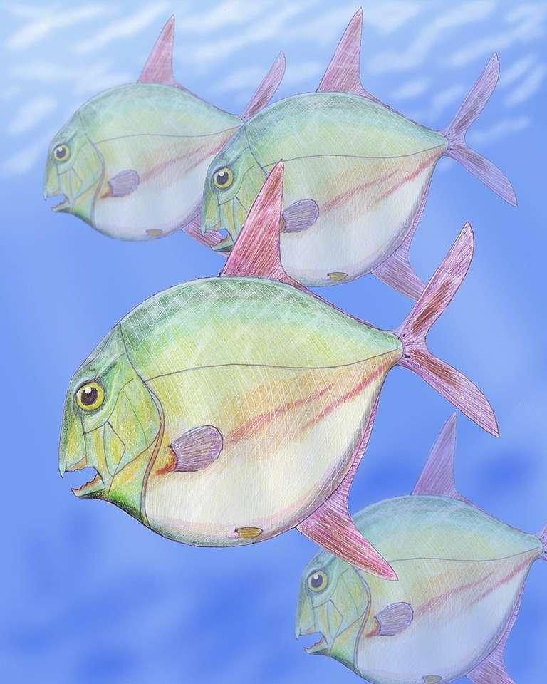Pycnodontiformes - Pycnodontiformes - een rij uitgestorven botvissen. De eerste Pycnodontiformes verschenen in het Late Trias, aan het begin van het Mesozoïcum, terwijl de laatste (vertegenwoordigers van Pycnodontidae (4×6)
