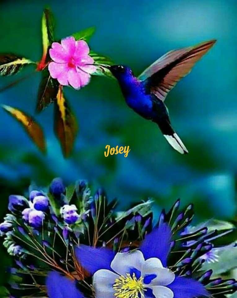 Koliber - Zwierzęta na wolności (15×20)