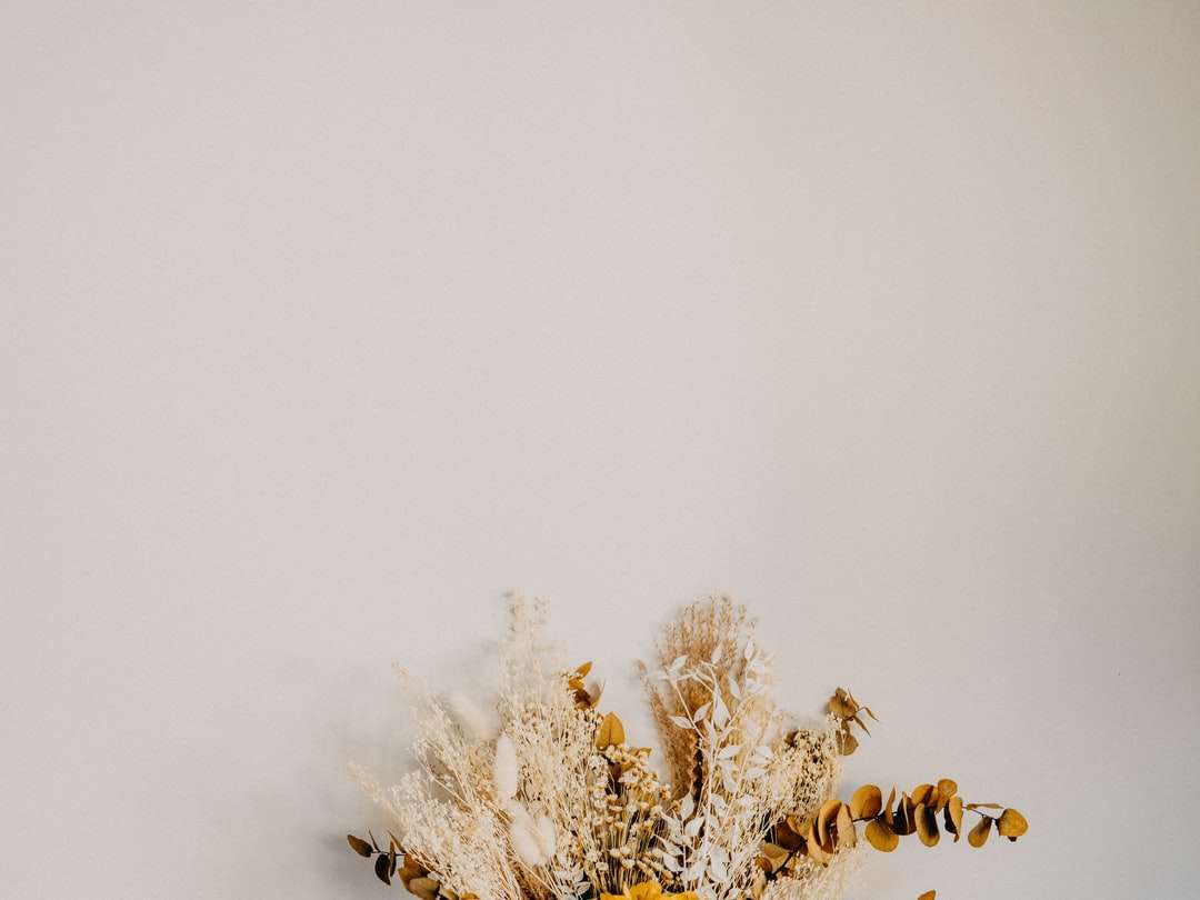 biała i brązowa roślina na białym tle - Suszone kwiaty konserwowane pomarańczowe, złote i brązowe (20×15)