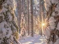 Inverno nella foresta.