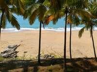 palma na pláži s hnědým pískem během dne