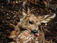 ciervo marrón sobre hojas secas marrones