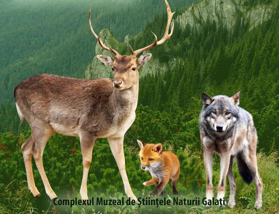 Wilde dieren - Wilde dieren uit Roemenië (5×4)
