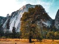 καταπράσινα δέντρα κοντά στο βουνό κατά τη διάρκεια της ημέρας