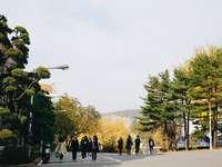 personnes marchant dans la rue pendant la journée