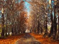 brun väg mellan bruna träd under dagtid