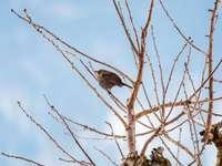 кафява птица на кафяв дървесен клон през деня