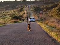 Chien enduit court brun sur route goudronnée gris pendant la journée