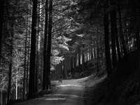 Graustufenfoto der Person, die auf Weg zwischen Bäumen geht