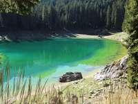 zelené jezero obklopené zelenými stromy během dne