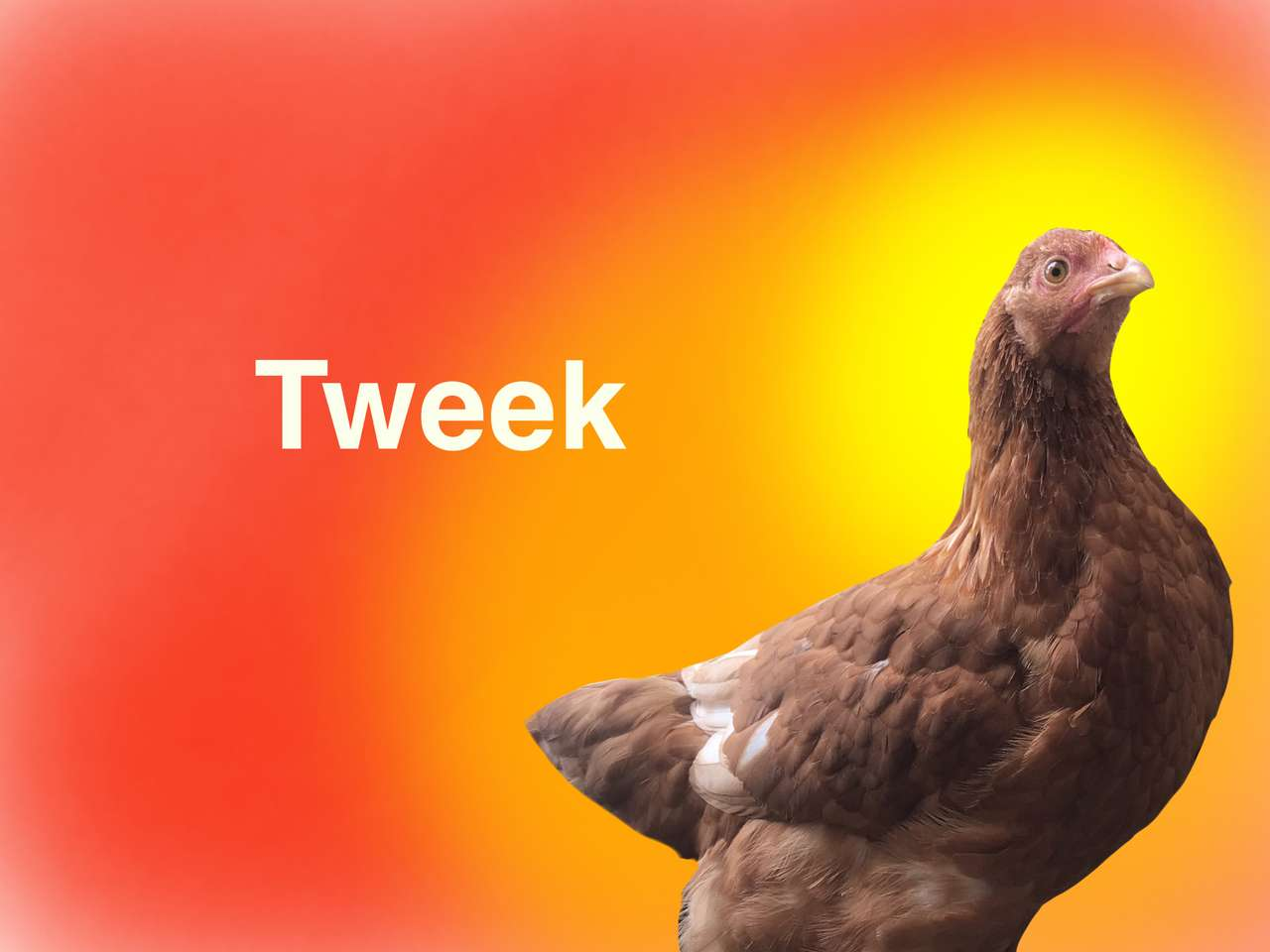 Pintos de galinha Tweek - É uma galinha marrom (12×9)