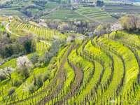 Лозарство от Гориска Бръда в Словения