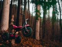 röd och svart cykel i skogen