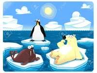 Polární zvířata sedí na slunci